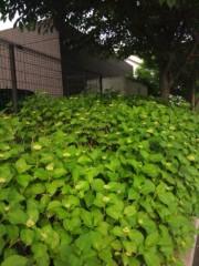 佐藤太三夫 公式ブログ/紫陽花の芽が 画像2