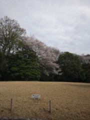 佐藤太三夫 公式ブログ/こっちも桜 画像1