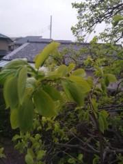 佐藤太三夫 公式ブログ/家の前にある、柿の木です。 画像1