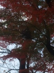佐藤太三夫 公式ブログ/銀杏 画像2