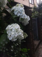 佐藤太三夫 公式ブログ/白からの色変わり 画像1