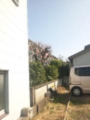 佐藤太三夫 公式ブログ/桜 画像3