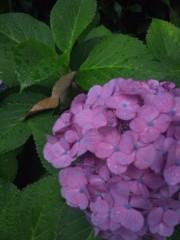 佐藤太三夫 公式ブログ/朝方の雨 画像1