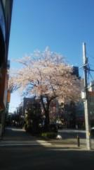 佐藤太三夫 公式ブログ/水天宮の通りは桜が満開 画像3