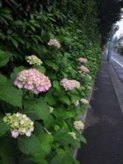 佐藤太三夫 公式ブログ/紫陽花  雨が降る 画像1
