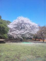 佐藤太三夫 公式ブログ/代々木公園 画像1