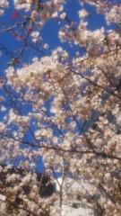 佐藤太三夫 公式ブログ/近くの茅場橋のたもとも満開 画像1