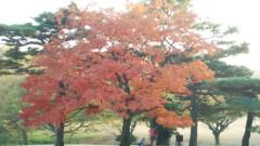 佐藤太三夫 公式ブログ/綺麗に色付いてます 画像3