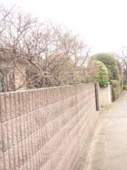佐藤太三夫 公式ブログ/家の近くの蕾 画像2