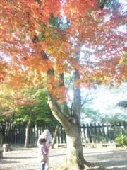 佐藤太三夫 公式ブログ/紅葉 画像3