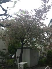 佐藤太三夫 公式ブログ/今日も雨 画像2