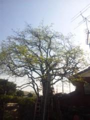 佐藤太三夫 公式ブログ/柿の木です。 画像2