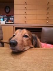 櫻井秀勲 公式ブログ/わが家の犬です 画像1