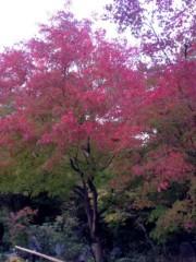 松本真依 公式ブログ/☆秋から冬へ☆ 画像3