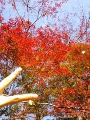 彩羽真矢 公式ブログ/紅葉(^O^) 画像1