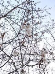 彩羽真矢 公式ブログ/素晴らしいバースデー 画像3