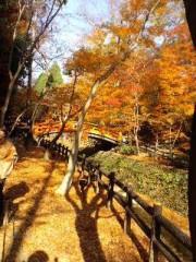 彩羽真矢 公式ブログ/紅葉(^O^) 画像2