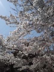 彩羽真矢 公式ブログ/花見散歩 画像1
