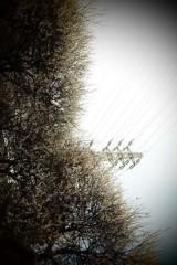 白井蛍 公式ブログ/歌なら。 画像1