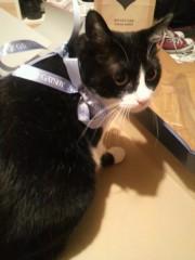 白井蛍 公式ブログ/太陽に…改め、猫に起こされた 画像2