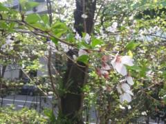 石原幸弘 公式ブログ/2011-04-11 07:01:18 画像1