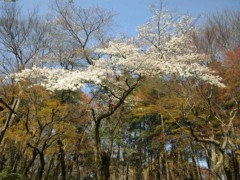 石原幸弘 公式ブログ/2011-04-06 09:24:42 画像1