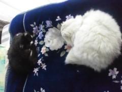 明日香 公式ブログ/ネコたちと。。。 画像1