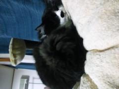 明日香 公式ブログ/ネコたちと。。。 画像3