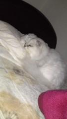 明日香 公式ブログ/ネコと。。。 画像1