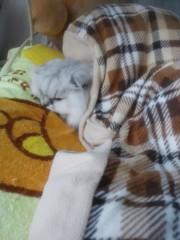 明日香 公式ブログ/朝から猫に枕取られたどー 画像2