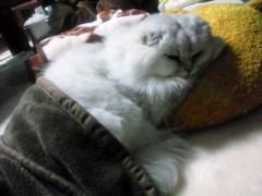 明日香 公式ブログ/おやすみなさい(。・ω・。) 画像1