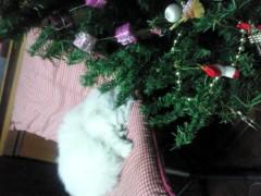 明日香 公式ブログ/ホワイトクリスマス� 画像2