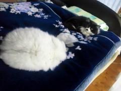 明日香 公式ブログ/ネコたちと。。。 画像2