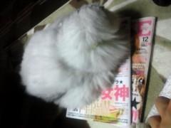 明日香 公式ブログ/ネコたちと明日香の過ごし方 画像2