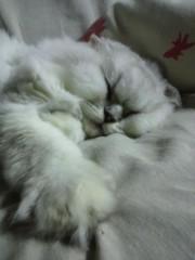 明日香 公式ブログ/猫さんたちがどんどん冬毛になっていきます 画像2