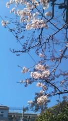 明日香 公式ブログ/今日の春 画像1