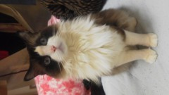 北ともみ 公式ブログ/でか猫 画像1