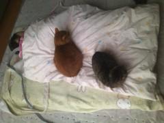 川瀬富美子 公式ブログ/うちの猫たち 画像2