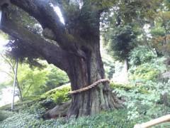 川瀬富美子 公式ブログ/椿山荘のお庭 画像1