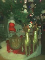 川瀬富美子 公式ブログ/クリスマス・・我が家のツリー見張り番 画像1