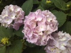 川瀬富美子 公式ブログ/仕事帰りに・・・ちょっと寄り道 画像2