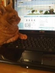 川瀬富美子 公式ブログ/うちの猫たち 画像1