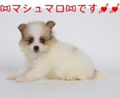 中川紗耶加 公式ブログ/☆生まれたての☆ 画像2