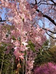 田村晃一 公式ブログ/桜を見に散歩へ 画像2
