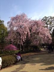 田村晃一 公式ブログ/桜を見に散歩へ 画像1
