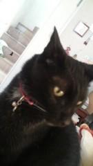椿姫彩菜 公式ブログ/うちの猫 画像1