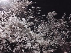 池田昌子 公式ブログ/上野の桜 画像2