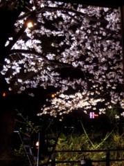 池田昌子 公式ブログ/初お花見♪ 画像2