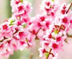 池田昌子 公式ブログ/3月3日  画像1