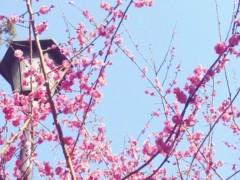 池田昌子 公式ブログ/花便り♪ 画像1